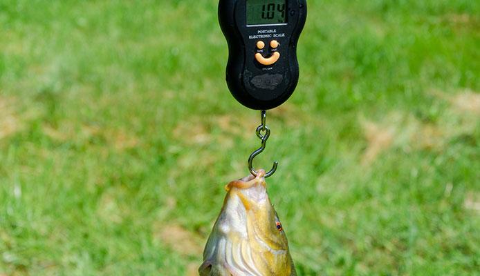 10 mejores básculas de pesca en 2020