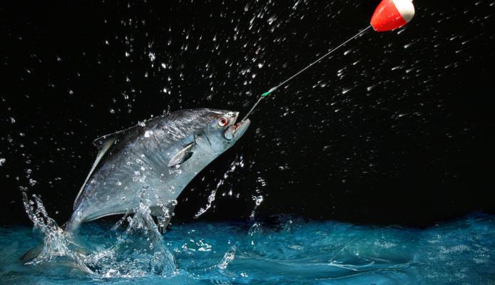 10 Mejores flotadores De Pesca En 2020