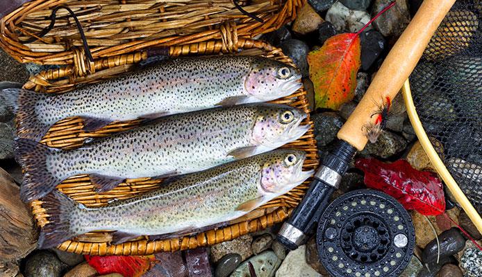 10 Mejores Carretes De Pesca De Trucha En 2020